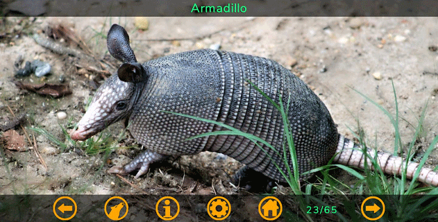 [APP][FREE][4.1+] Animal photos, sounds and short descriptions-armadillo.png
