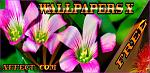 Wallpapers X check it out :)-piconewallpapersx.jpg
