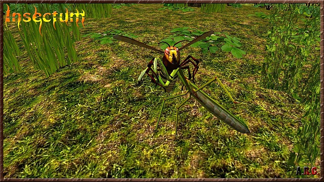 Insectum-wild insect world (Free)-15a.jpg