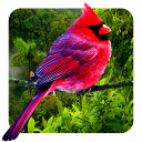 [4.0+] 3D birds parallax Live wallpapers-ic_launcher_bp_free_128.png