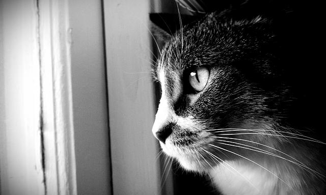 Weekly photo contest -- black and white-pootat-black-white-2012.jpg