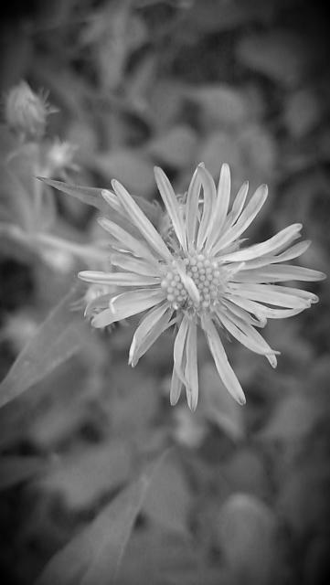 Weekly photo contest -- black and white-imag0088_burst002.jpg