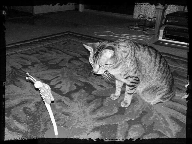Weekly photo contest -- black and white-boopster-stare-down.jpg