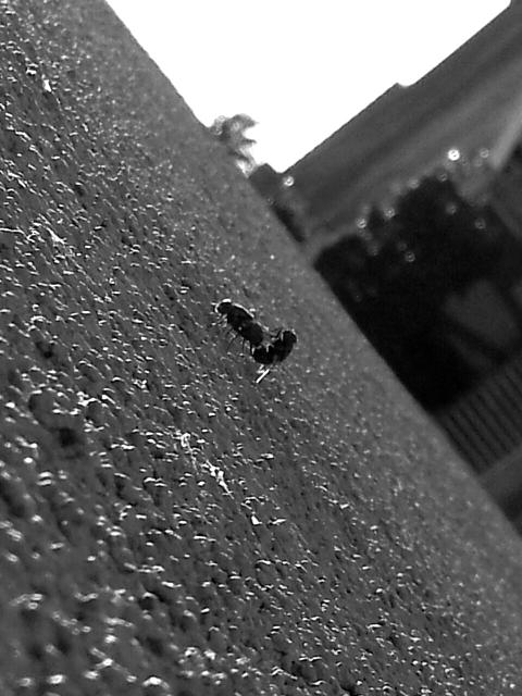Weekly photo contest -- black and white-2012-09-28-03.05.22.jpg