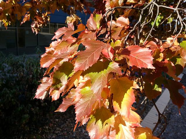Weekly photo contest -- color-20121003_084120.jpg