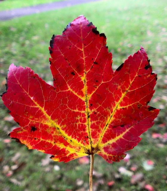 Weekly photo contest -- color-leaf-me-alone.jpg