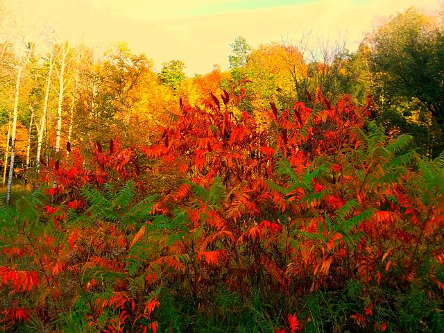 Weekly photo contest -- color-2012.10.06_a.jpg
