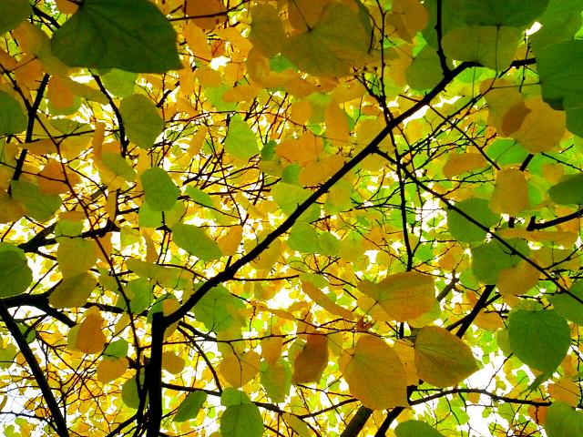 Weekly photo contest -- color-img_20121007_194458.jpg