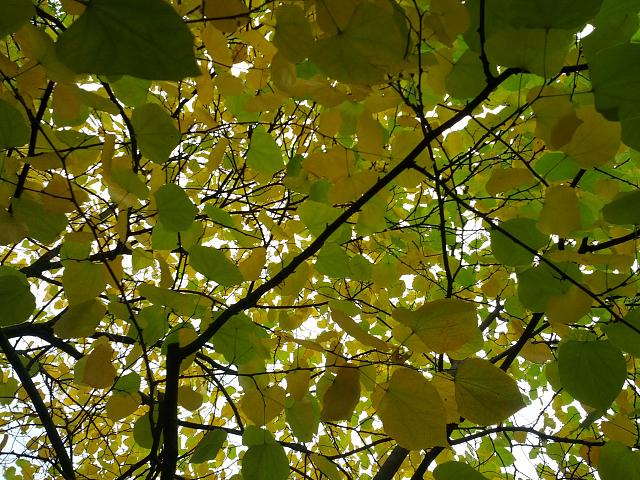 Weekly photo contest -- color-img_20121006_135523.jpg