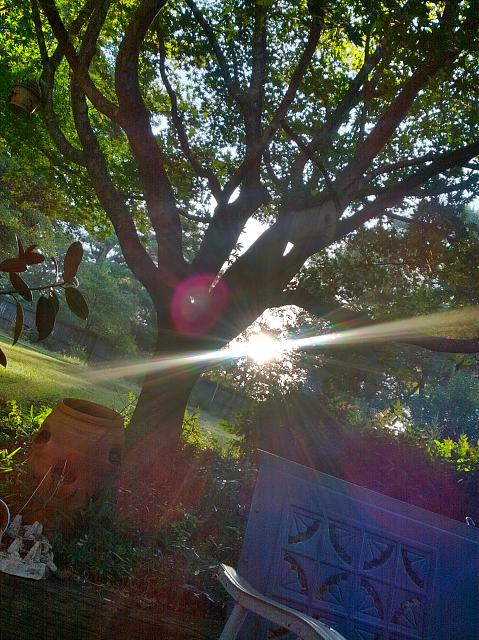 Weekly photo contest -- Purple Haze (lens flare)-hdr_00039_0.jpg