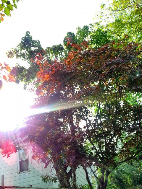 Weekly photo contest -- Purple Haze (lens flare)-20121017_153348.jpg