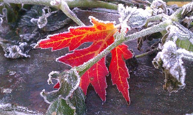 Weekly photo contest -- the weather-imag0109.jpg
