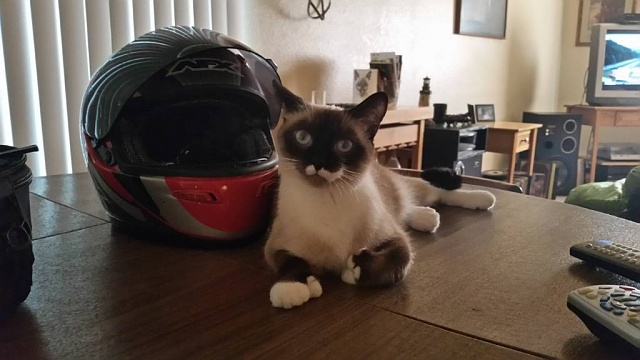 AC Members - Show us Your Pets!-20150718_174525.jpg