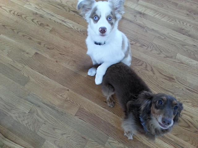 AC Members - Show us Your Pets!-20121212_092243.jpg