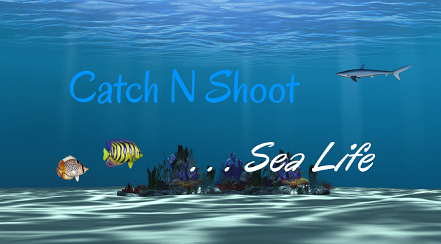Catch N Shoot 2 ... Sea Life [GAME] [FREE]-windows_846x468.png