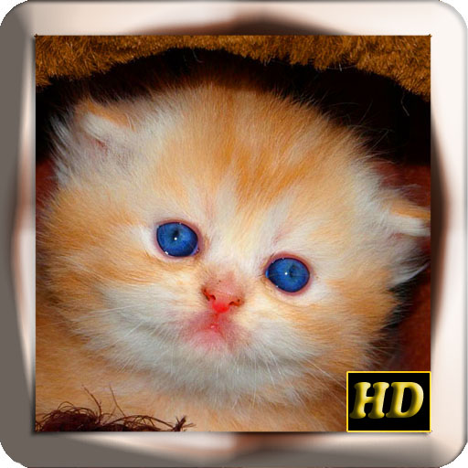 [Free][app][Android] Baby Kittens-HD Wallpapers-kittens.jpg