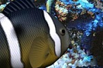 [FREE][GAME] Underwater Hidden Object-promote_180x120.png