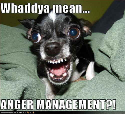 Nexus 4 Issues: Are they sorted out?-funny-dog-pictures-anger-management.jpg