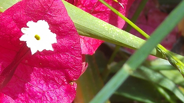 LG G4 : Pictures !-20150606_141051.jpg