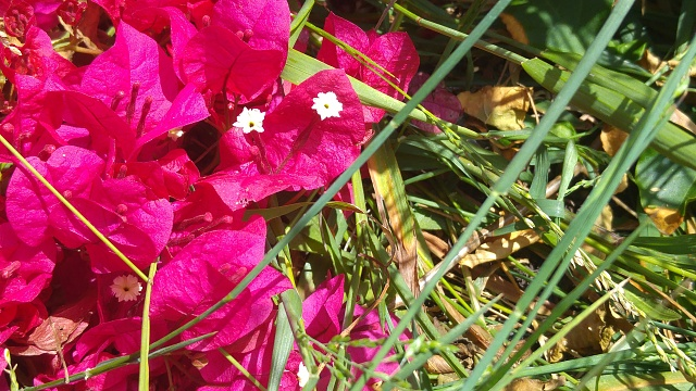 LG G4 : Pictures !-20150606_141115.jpg