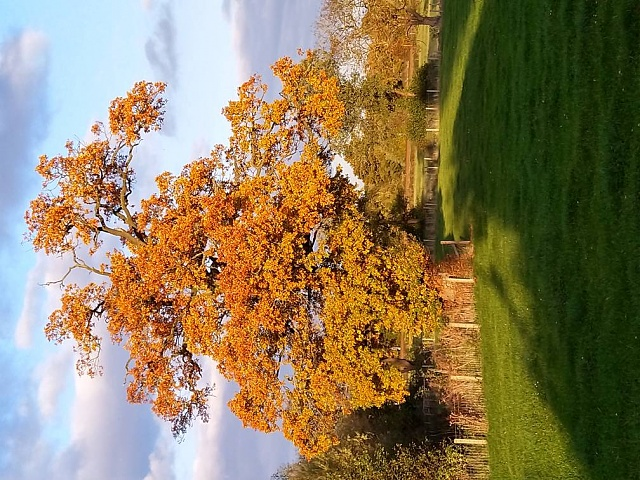 Pictures taken with your 7.1-oak-20tree-20november-202019.jpeg