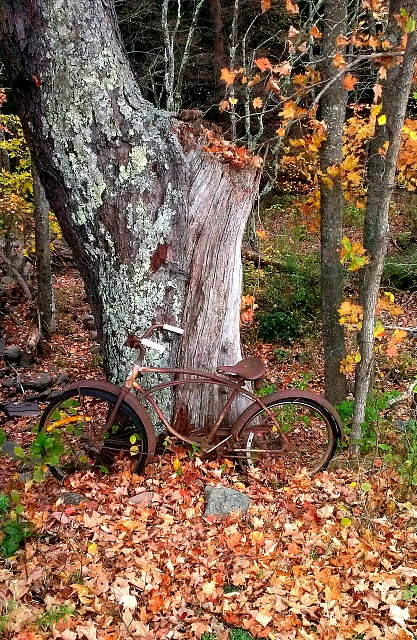 Weekly Photo Contest: Wood-abandonedbike.jpg