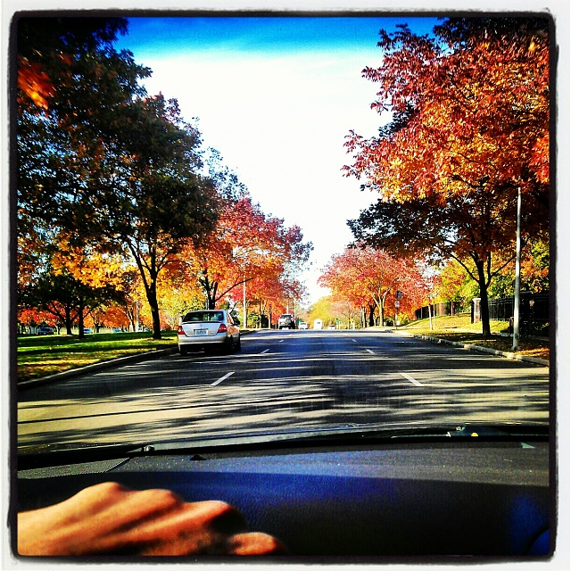 Weekly Photo Contest: Window-wardparkway_fall.jpg