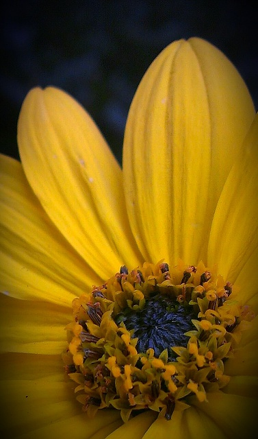 Weekly Photo Contest: Flowers-imag0205-1-2.jpg