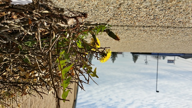 Weekly Photo Contest: Yellow-20140425_165838_richtone-hdr-.jpg