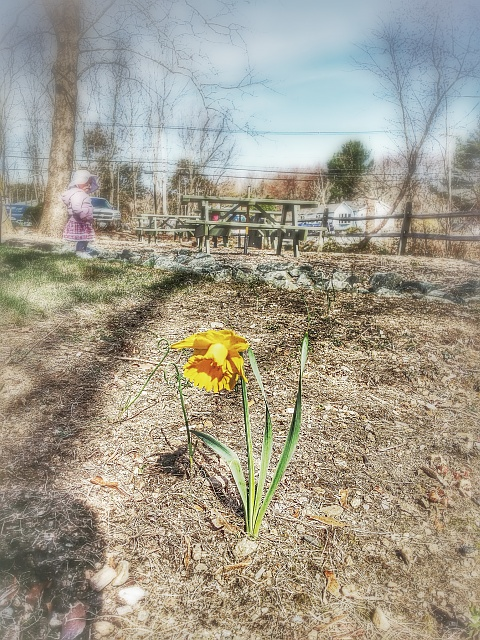 Weekly Photo Contest: Yellow-20140420_092723.jpg