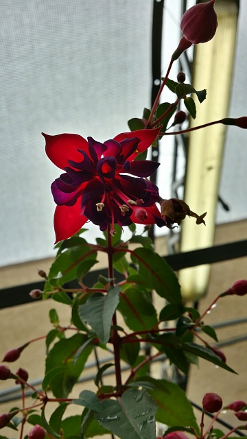 Weekly Photo Contest: Red-20140420_161813_richtone-hdr-_1.jpg