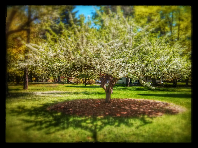 Weekly Photo Contest: Parks-img_20140517_123847_1.jpg