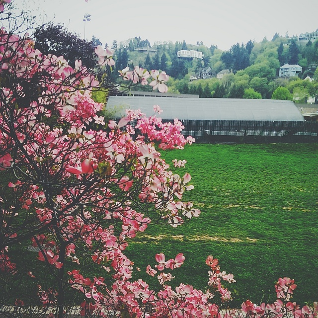Weekly Photo Contest: Parks-img_20140419_121314-2.jpg
