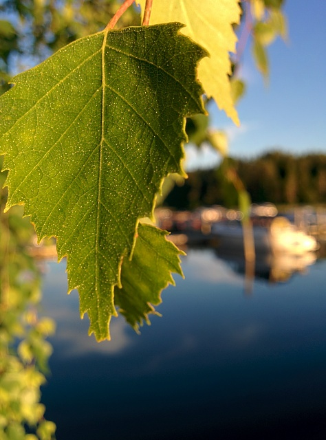 Weekly Photo Contest: Green-img_20140706_212003.jpg