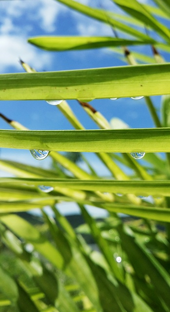 Weekly Photo Contest: Reflection-waterdroplet_reflection.jpg