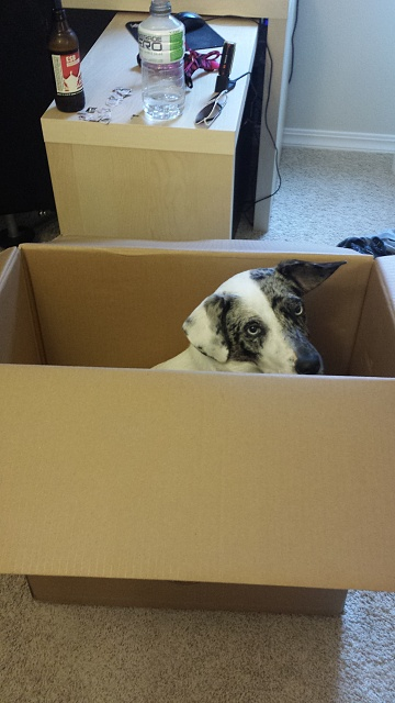 Weekly Photo Contest: Animals-ellie-box.jpg
