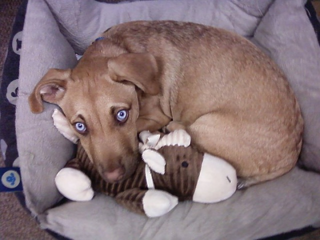 Weekly Photo Contest: Animals-dexter-bed-buddy.jpg