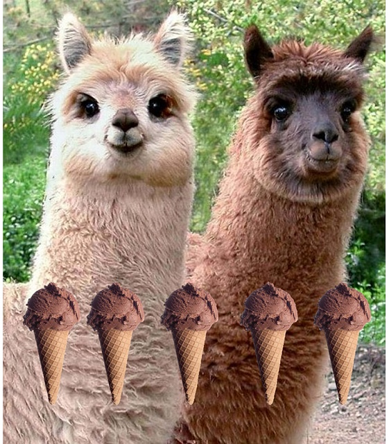 Your Favorite Ice Cream Flavor-llama-drama.jpg