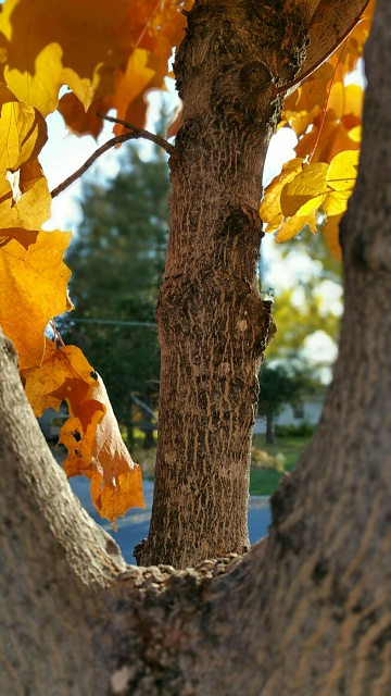 Note 4 Camera Pictures!  Got one? We would love to see it.-uploadfromtaptalk1413769102431.jpg