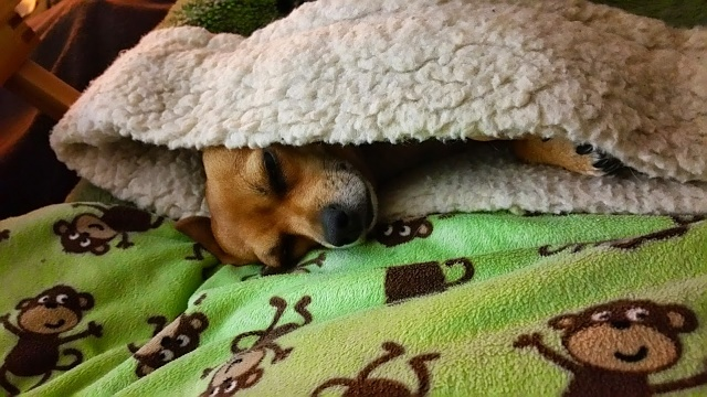 Note 4 Camera Pictures!  Got one? We would love to see it.-macy-sleeping-her-bag.jpg