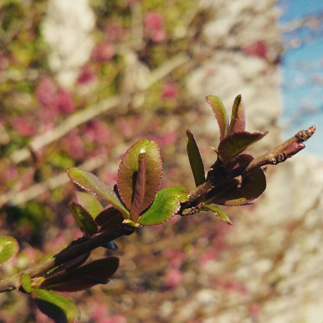 Note 4 Camera Pictures!  Got one? We would love to see it.-img_20150322_181752.jpg