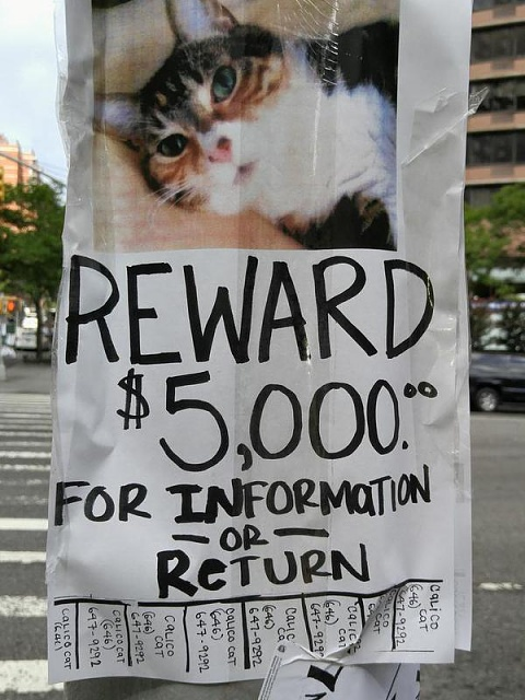 I think Samsung is in trouble-missing-cat-poster.jpg
