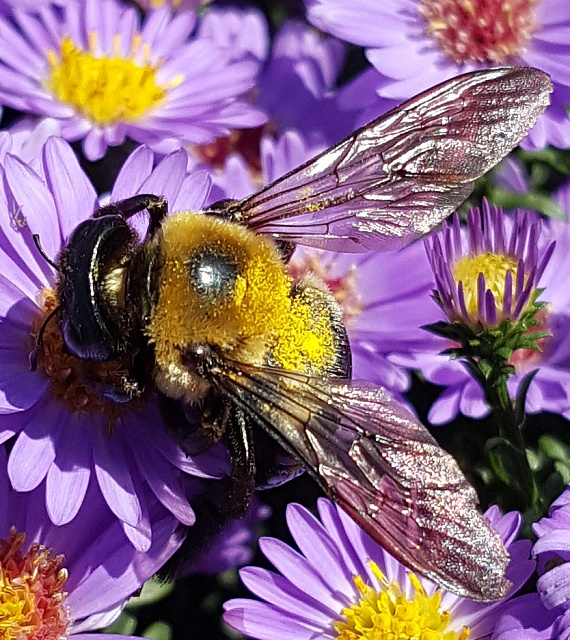 Note 5: Camera Shots! Show us your pictures-bumblebee.jpg