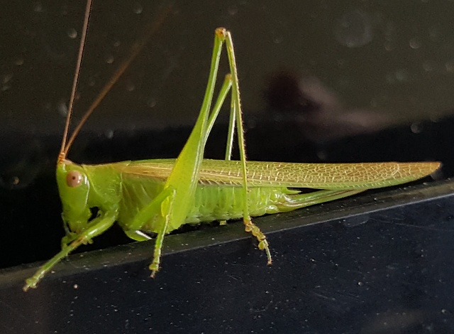 Note 5: Camera Shots! Show us your pictures-grasshopper.jpg