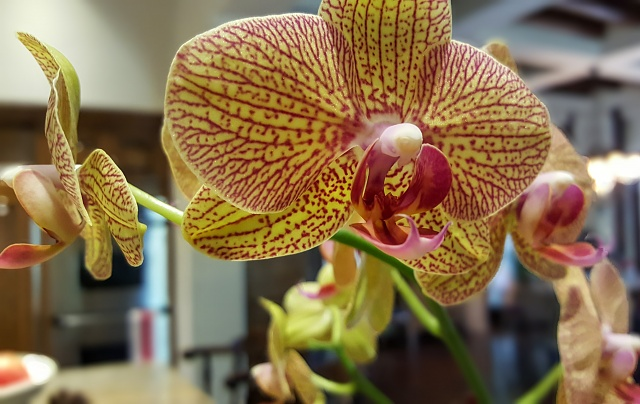 Note 5: Camera Shots! Show us your pictures-orchid.jpg