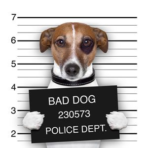 Puppy vs Note 5...RIP Note 5-contentimage_2d00_mugshot.jpg