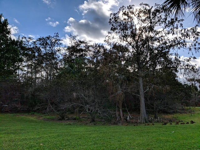 Post Pictures Taken With Your Note 9-img_20190112_093527.jpeg