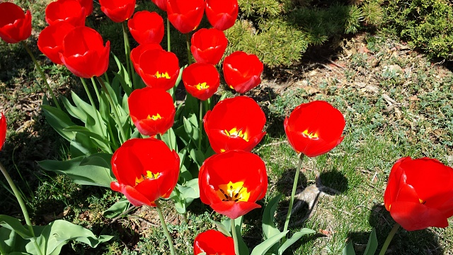 [Galaxy S4] Camera Pictures: Let's see what you got!-2013-04-28-10.49.27.jpg