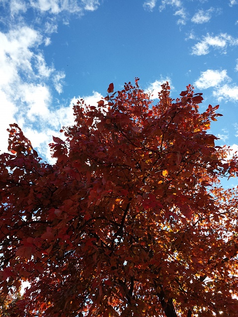 [Galaxy S4] Camera Pictures: Let's see what you got!-20131101_154750.jpg