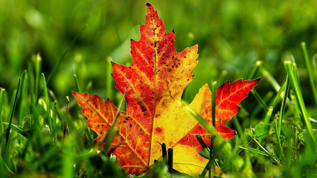 Galaxy S4 - Some Nice Wallpapers-fallen-leaf-grass.jpg